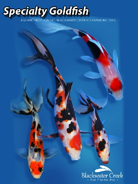 Koi sale for Koi tank size