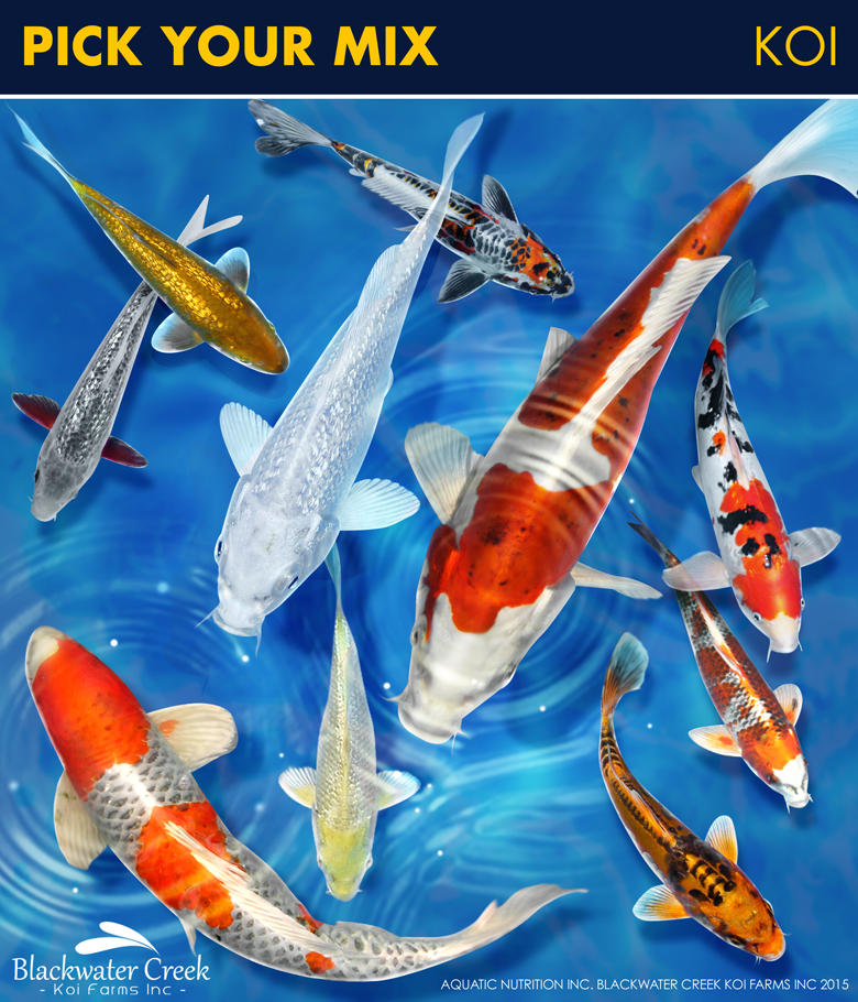 Pick your mix for Bulk koi fish for sale