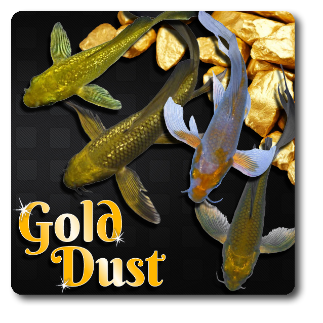 Gold Dust Butterfly Koi Free Shipping Gold Dust Butterfly