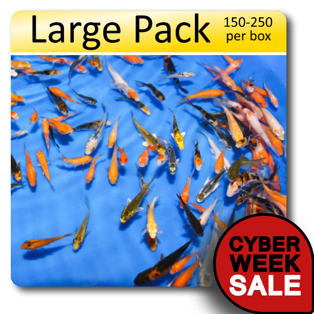 Peanuts large pack free shipping 150 250 fish large box of for Baby koi fish for sale cheap