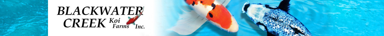 Blackwater Koi Farms - Butterfly Koi for Sale and Longfin Koi