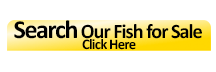 Search Our Fish For Sale