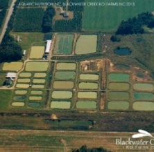 Blackwater Creek Koi Farm
