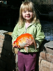 Giant Blackwater Creek Goldfish