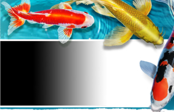 Ways to buy koi for Best food for koi fish
